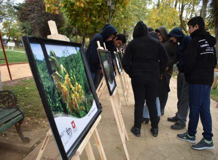 Universidad de Talca, presenta exposición fotográfica sobre flora y fauna nativa, presente en los bosques de Ruil de Empedrado